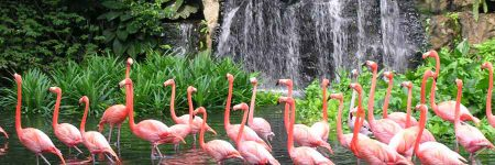 Ausflug Jurong Bird Park © Singapore Tourism Board